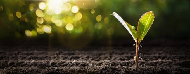 La graine de la CJIP en matière environnementale est plantée
